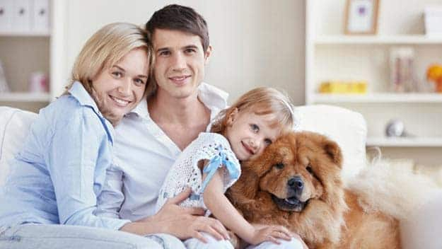 Wills & Trusts dog-young-family Direct Wills Upper Edmonton